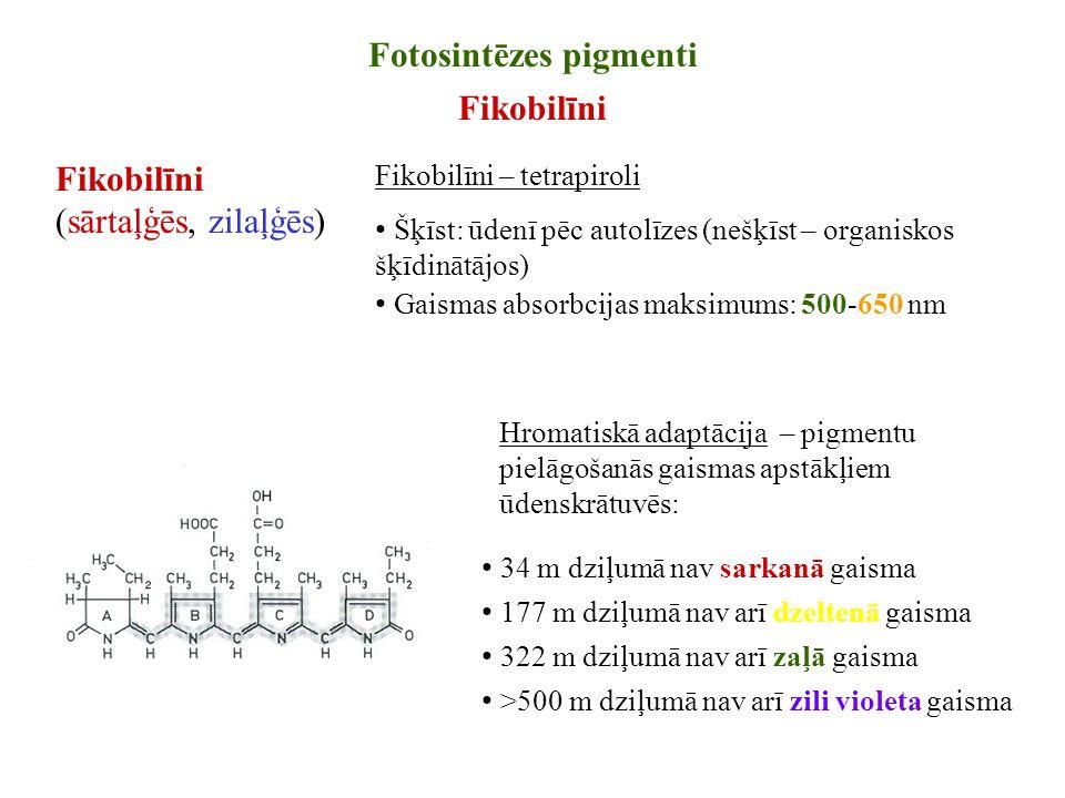 Fotosintēzes pigmenti Fikobilīni Fikobilīni – tetrapiroli Šķīst: ūdenī pēc autolīzes (nešķīst – organiskos šķīdinātājos) Gaismas absorbcijas maksimums