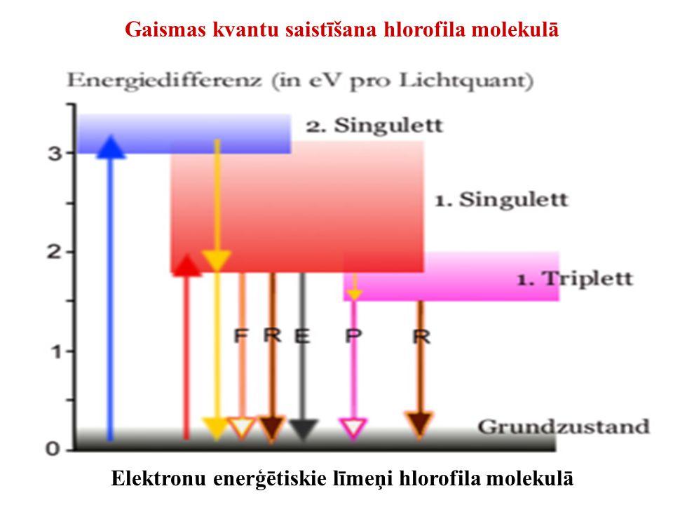 Gaismas kvantu saistīšana hlorofila molekulā Elektronu enerģētiskie līmeņi hlorofila molekulā