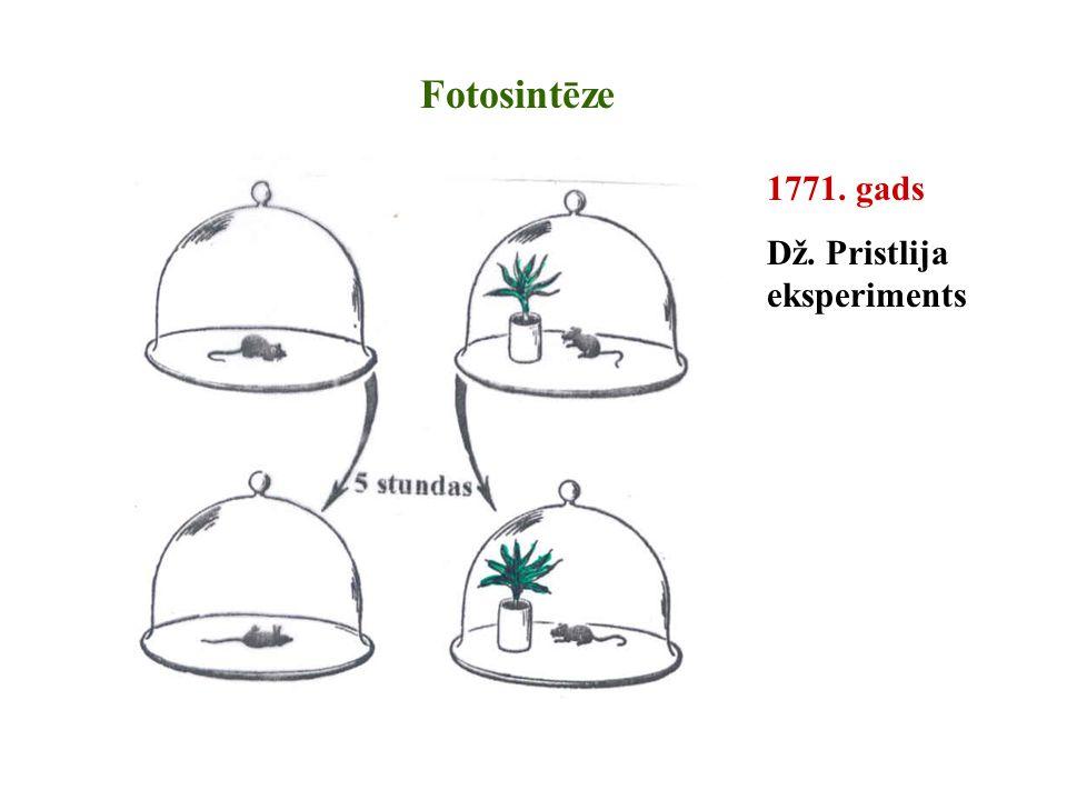 1771. gads Dž. Pristlija eksperiments