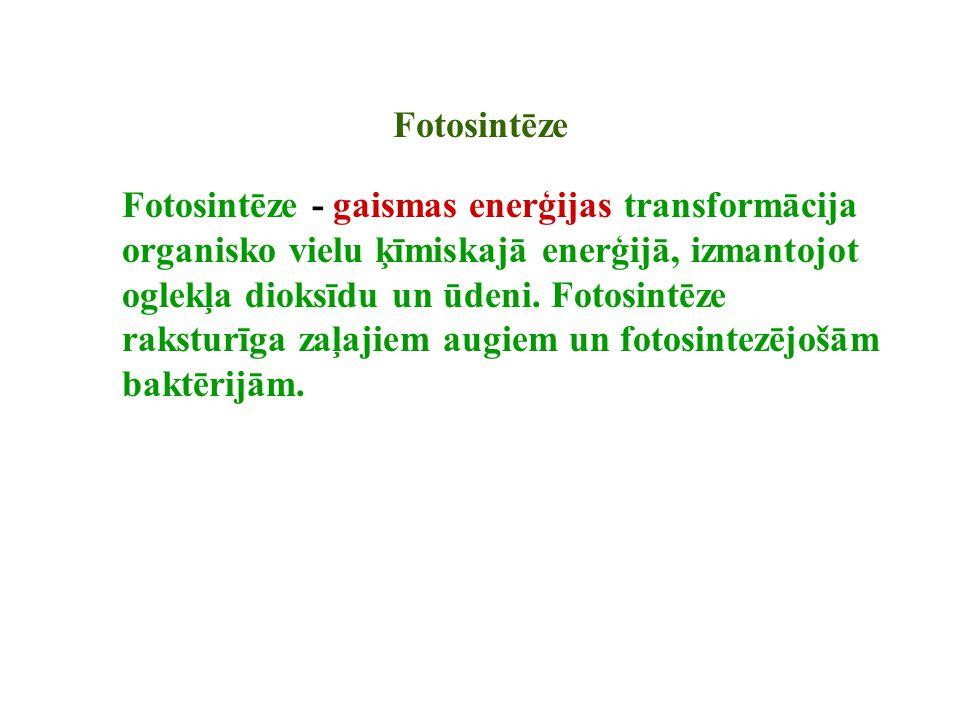 Fotosintēze Fotosintēze - gaismas enerģijas transformācija organisko vielu ķīmiskajā enerģijā, izmantojot oglekļa dioksīdu un ūdeni. Fotosintēze rakst
