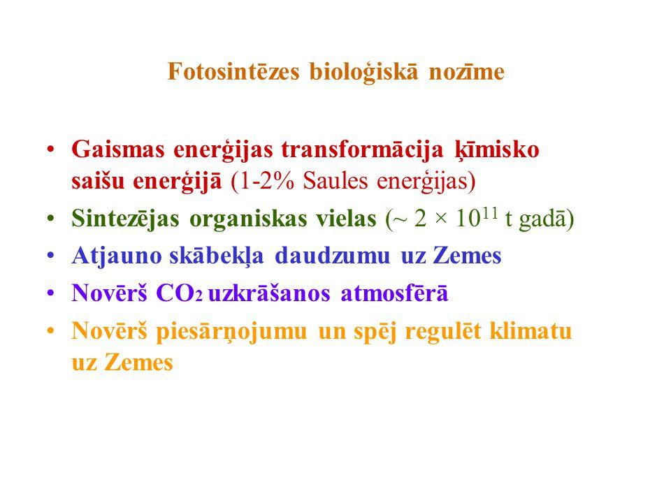 Fotosintēzes bioloģiskā nozīme Gaismas enerģijas transformācija ķīmisko saišu enerģijā (1-2% Saules enerģijas) Sintezējas organiskas vielas (~ 2 × 10