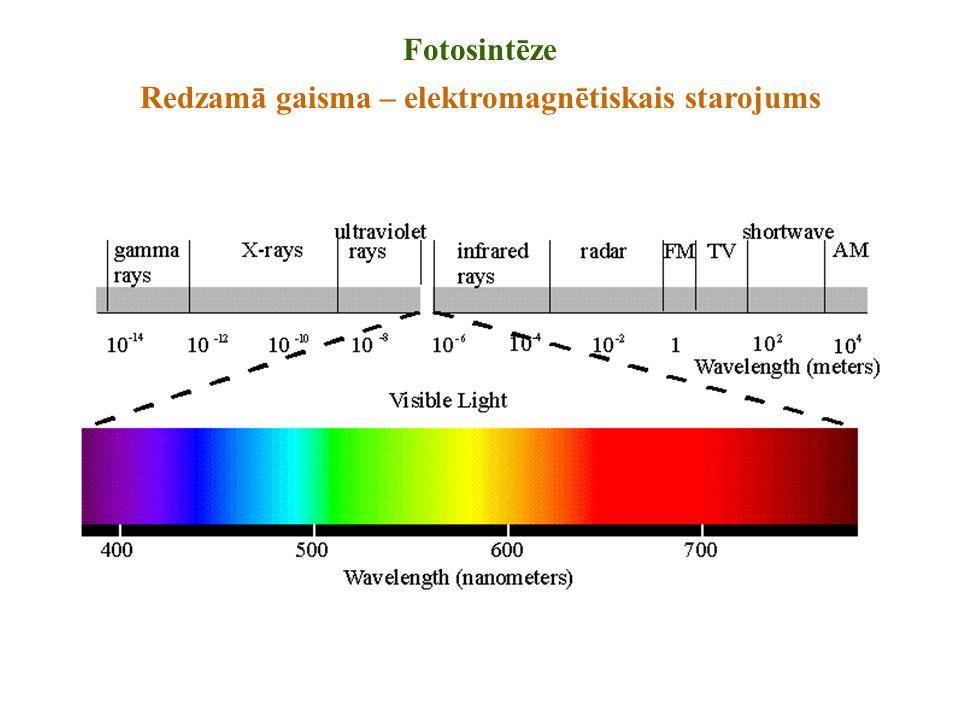 Fotosintēze Redzamā gaisma – elektromagnētiskais starojums