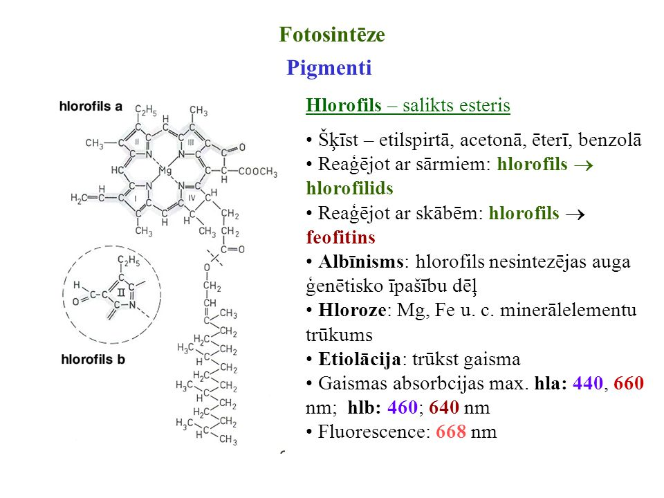 Fotosintēze Pigmenti Hlorofils – salikts esteris Šķīst – etilspirtā, acetonā, ēterī, benzolā Reaģējot ar sārmiem: hlorofils  hlorofilids Reaģējot ar