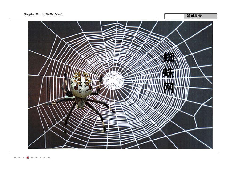 蜘蛛网蜘蛛网