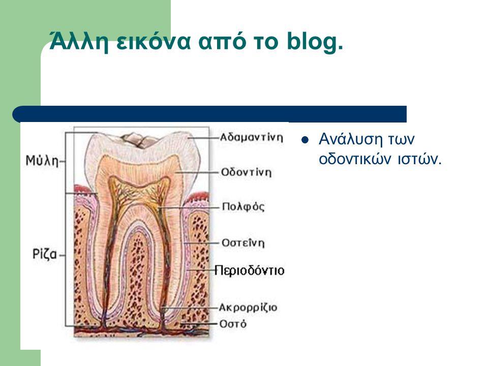 Άλλη εικόνα από το blog. Ανάλυση των οδοντικών ιστών.