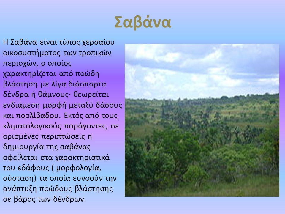 Σαβάνα Η Σαβάνα είναι τύπος χερσαίου οικοσυστήματος των τροπικών περιοχών, ο οποίος χαρακτηρίζεται από ποώδη βλάστηση με λίγα διάσπαρτα δένδρα ή θάμνο