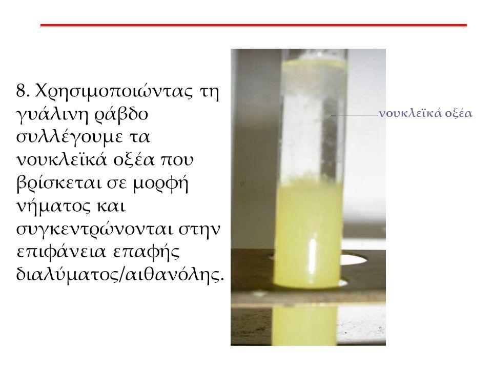 νουκλεϊκά οξέα 8. Χρησιμοποιώντας τη γυάλινη ράβδο συλλέγουμε τα νουκλεϊκά οξέα που βρίσκεται σε μορφή νήματος και συγκεντρώνονται στην επιφάνεια επαφ