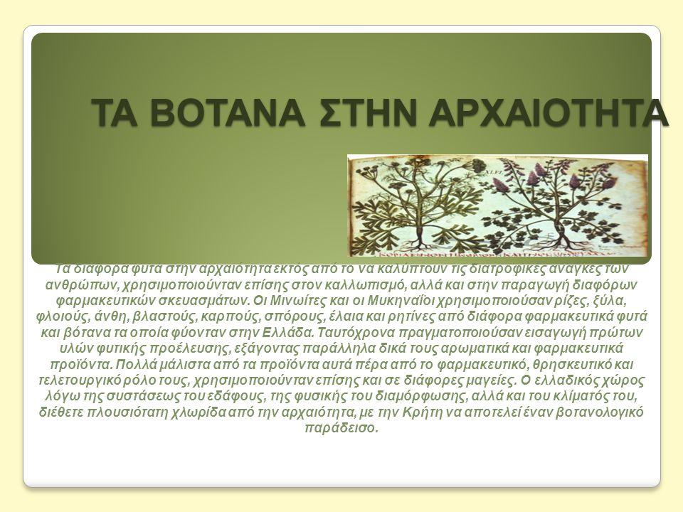 ΤΑ ΒΟΤΑΝΑ ΣΤΗΝ ΑΡΧΑΙΟΤΗΤΑ Τα διάφορα φυτά στην αρχαιότητα εκτός από το να καλύπτουν τις διατροφικές ανάγκες των ανθρώπων, χρησιμοποιούνταν επίσης στον καλλωπισμό, αλλά και στην παραγωγή διαφόρων φαρμακευτικών σκευασμάτων.