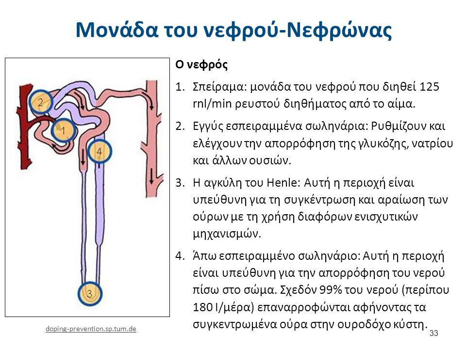 Μονάδα του νεφρού-Νεφρώνας 33 Ο νεφρός 1.Σπείραμα: μονάδα του νεφρού που διηθεί 125 rnl/min ρευστού διηθήματος από το αίμα. 2.Εγγύς εσπειραμμένα σωλην