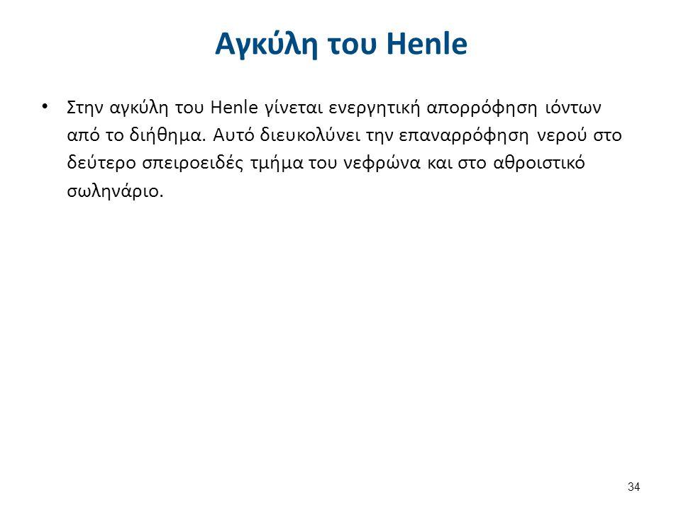 Αγκύλη του Henle Στην αγκύλη του Henle γίνεται ενεργητική απορρόφηση ιόντων από το διήθημα. Αυτό διευκολύνει την επαναρρόφηση νερού στο δεύτερο σπειρο