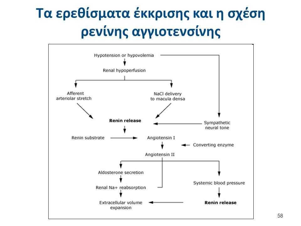 Τα ερεθίσματα έκκρισης και η σχέση ρενίνης αγγιοτενσίνης 58