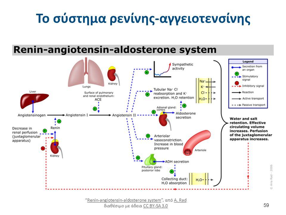 """Το σύστημα ρενίνης-αγγειοτενσίνης 59 """"Renin-angiotensin-aldosterone system"""", από A. Rad διαθέσιμο με άδεια CC BY-SA 3.0Renin-angiotensin-aldosterone s"""