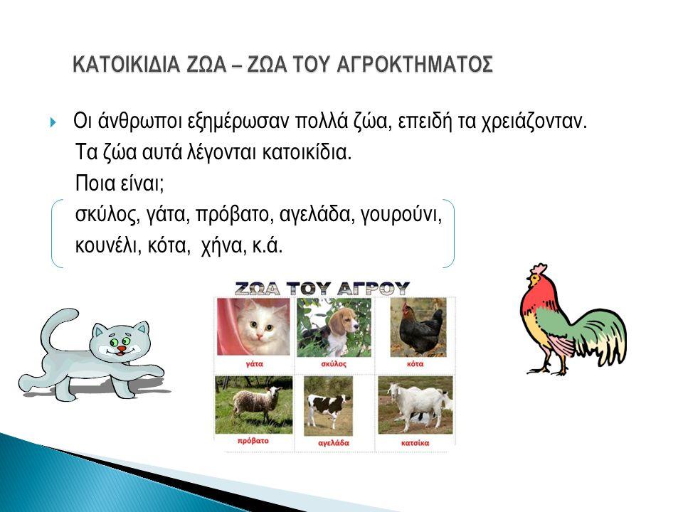  Οι άνθρωποι εξημέρωσαν πολλά ζώα, επειδή τα χρειάζονταν. Τα ζώα αυτά λέγονται κατοικίδια. Ποια είναι; σκύλος, γάτα, πρόβατο, αγελάδα, γουρούνι, κουν