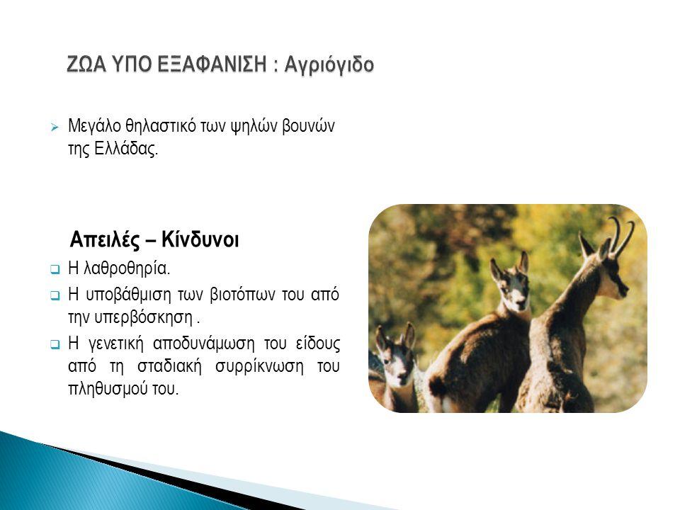  Μεγάλο θηλαστικό των ψηλών βουνών της Ελλάδας. Απειλές – Κίνδυνοι  Η λαθροθηρία.  Η υποβάθμιση των βιοτόπων του από την υπερβόσκηση.  Η γενετική