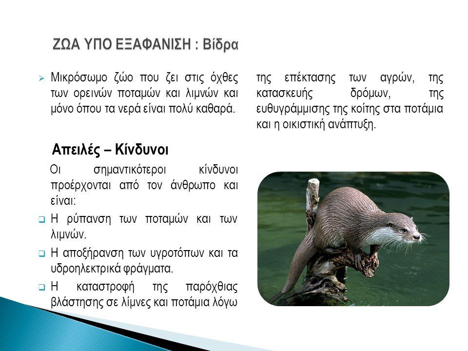  Μικρόσωμο ζώο που ζει στις όχθες των ορεινών ποταμών και λιμνών και μόνο όπου τα νερά είναι πολύ καθαρά. Απειλές – Κίνδυνοι Οι σημαντικότεροι κίνδυν