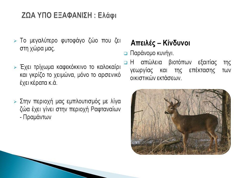  Το μεγαλύτερο φυτοφάγο ζώο που ζει στη χώρα μας.  Έχει τρίχωμα καφεκόκκινο το καλοκαίρι και γκρίζο το χειμώνα, μόνο το αρσενικό έχει κέρατα κ.ά. 