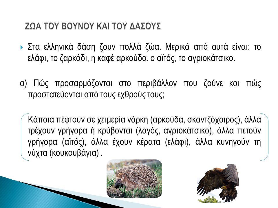  Στα ελληνικά δάση ζουν πολλά ζώα. Μερικά από αυτά είναι: το ελάφι, το ζαρκάδι, η καφέ αρκούδα, ο αϊτός, το αγριοκάτσικο. α) Πώς προσαρμόζονται στο π