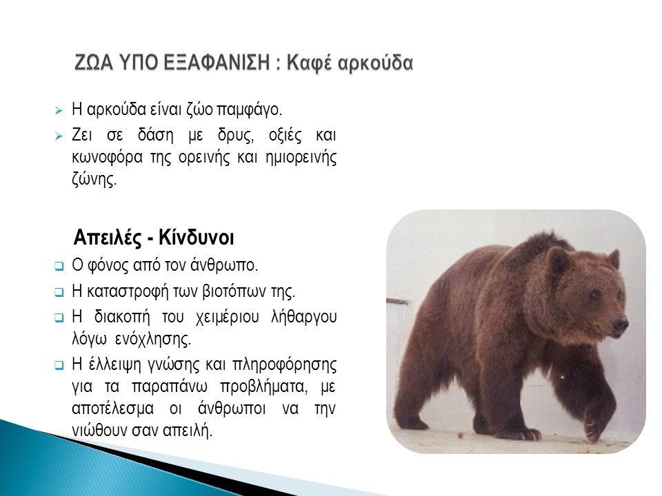  Η αρκούδα είναι ζώο παμφάγο.  Ζει σε δάση με δρυς, οξιές και κωνοφόρα της ορεινής και ημιορεινής ζώνης. Απειλές - Κίνδυνοι  Ο φόνος από τον άνθρωπ