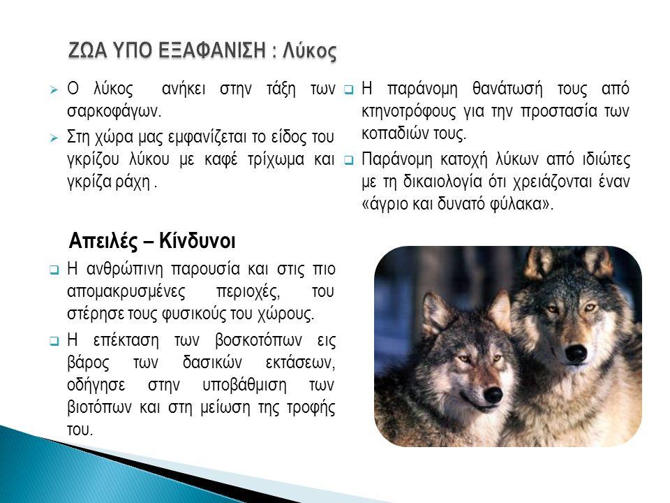  Μεγάλο θηλαστικό των ψηλών βουνών της Ελλάδας.Απειλές – Κίνδυνοι  Η λαθροθηρία.