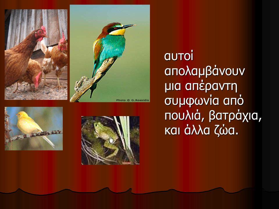 αυτοί απολαμβάνουν μια απέραντη συμφωνία από πουλιά, βατράχια, και άλλα ζώα.