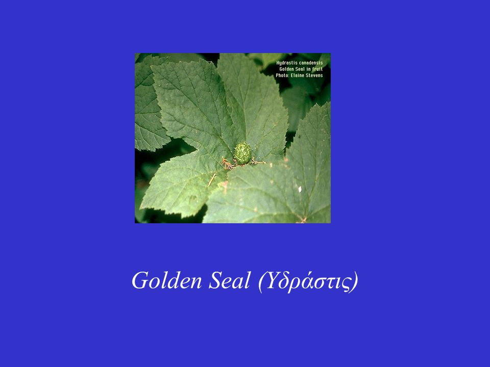 Είναι φυτό της Βόρειας Αμερικής, του οποίου η ρίζα έχει μεγάλη ιστορία στην παραδοσιακή ιατρική Οι Ινδιάνοι το θεωρούσαν ιερό φυτό, όχι μόνο για τις θεραπευτικές του ιδιότητες στις μολύνσεις και την ικανότητά του να σταματά τις αιμορραγίες, αλλά και γιατί παρείχε μια έντονη κίτρινη βαφή με την οποία έβαφαν τα πρόσωπά τους και τα άλογα σε περίοδο μάχης.