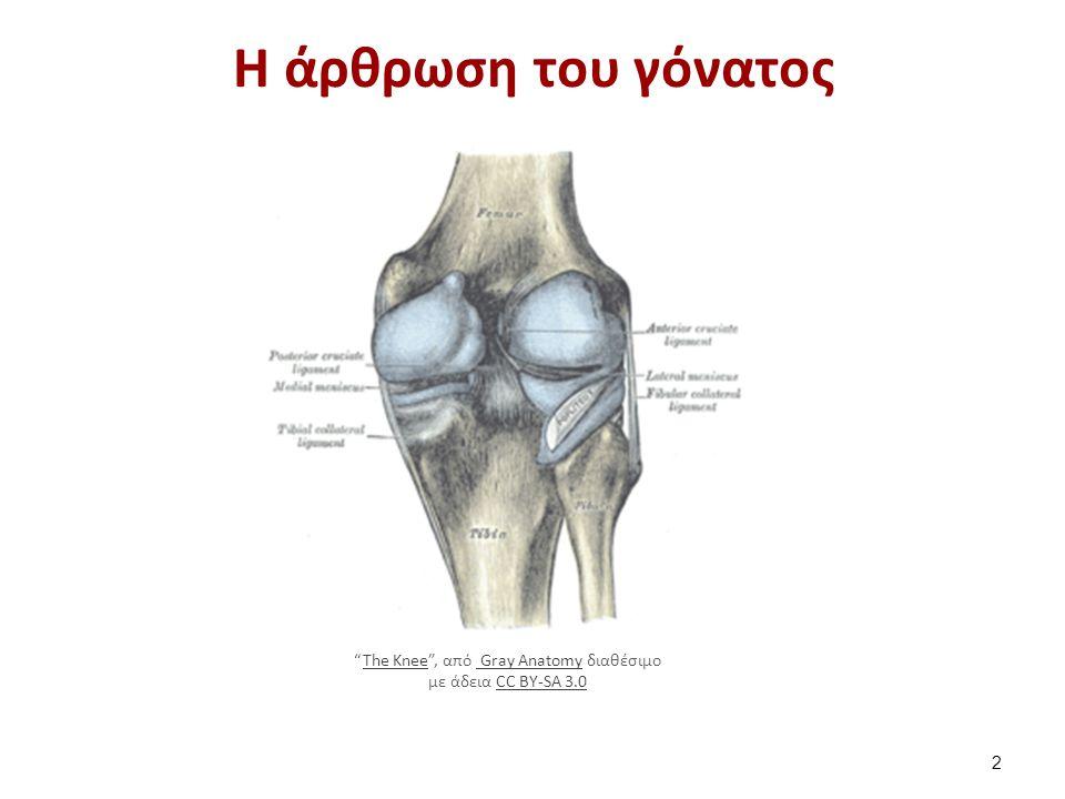 """Η άρθρωση του γόνατος 2 """"The Knee"""", από Gray Anatomy διαθέσιμο με άδεια CC BY-SA 3.0The Knee Gray AnatomyCC BY-SA 3.0"""
