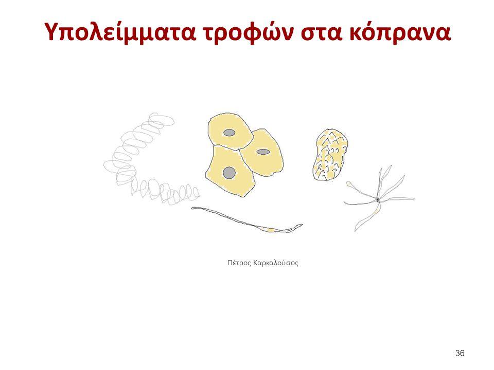 Υπολείμματα τροφών στα κόπρανα 36 Πέτρος Καρκαλούσος