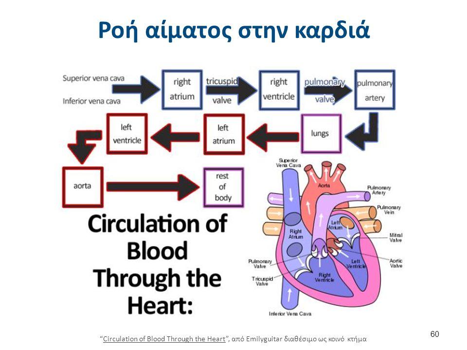 """Ροή αίματος στην καρδιά """"Circulation of Blood Through the Heart"""", από Emilyguitar διαθέσιμο ως κοινό κτήμαCirculation of Blood Through the Heart 60"""