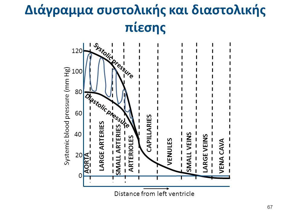 Διάγραμμα συστολικής και διαστολικής πίεσης Distance from left ventricle Systemic blood pressure (mm Hg) 0 20 40 60 80 100 120 Systolic pressure Diast