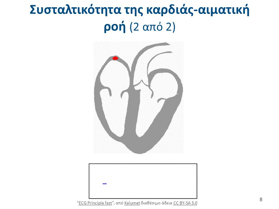 """Συσταλτικότητα της καρδιάς-αιματική ροή (2 από 2) """"ECG Principle fast"""", από Kalumet διαθέσιμο άδεια CC BY-SA 3.0ECG Principle fastKalumetCC BY-SA 3.0"""