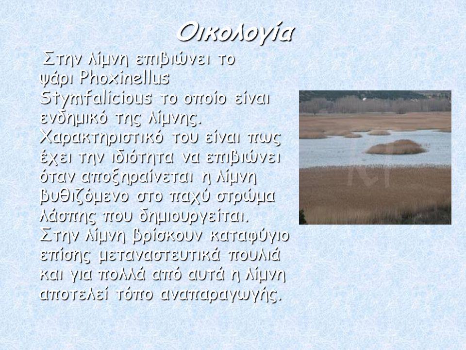Οικολογία Οικολογία Στην λίμνη επιβιώνει το ψάρι Phoxinellus Stymfalicious το οποίο είναι ενδημικό της λίμνης. Χαρακτηριστικό του είναι πως έχει την ι