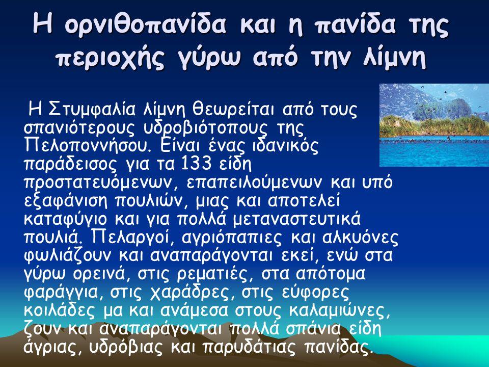 Η ορνιθοπανίδα και η πανίδα της περιοχής γύρω από την λίμνη Η Στυμφαλία λίμνη θεωρείται από τους σπανιότερους υδροβιότοπους της Πελοποννήσου. Είναι έν