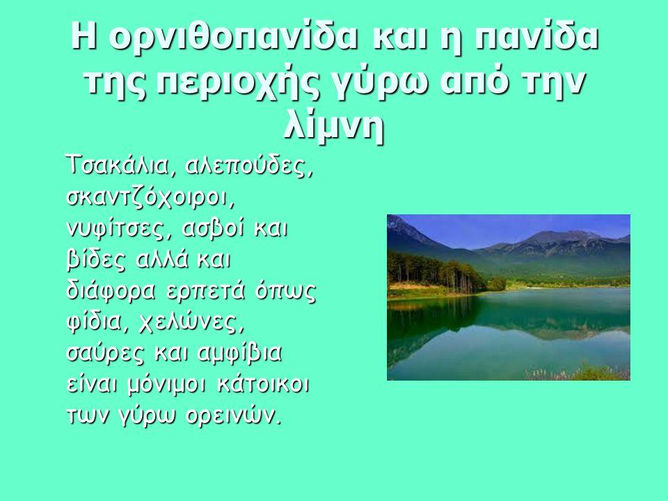 Η ορνιθοπανίδα και η πανίδα της περιοχής γύρω από την λίμνη Τσακάλια, αλεπούδες, σκαντζόχοιροι, νυφίτσες, ασβοί και βίδες αλλά και διάφορα ερπετά όπως