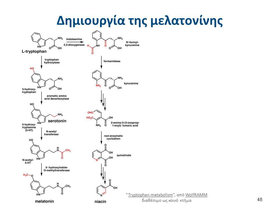 """Δημιουργία της μελατονίνης 48 """"Tryptophan metabolism"""", από WolfRAMM διαθέσιμο ως κοινό κτήμαTryptophan metabolismWolfRAMM"""