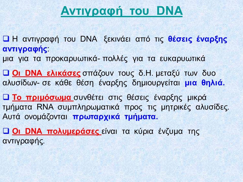 To DNA έχει την ικανότητα να αυτοδιπλασιάζεται Το DNA διπλασιάζεται μ' ένα μηχανισμό που ονομάζεται ημισυντηρητικός animation