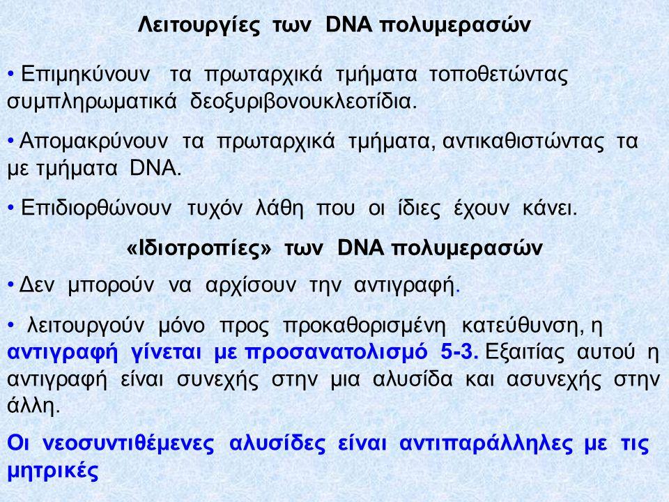Αντιγραφή του DNA  Η αντιγραφή του DNA ξεκινάει από τις θέσεις έναρξης αντιγραφής: μια για τα προκαρυωτικά- πολλές για τα ευκαρυωτικά  Οι DNA ελικάσες σπάζουν τους δ.Η.