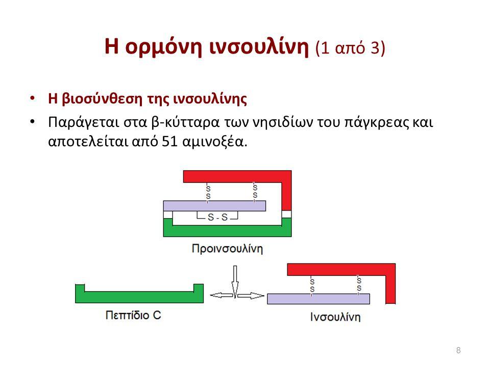 Η ορμόνη ινσουλίνη (1 από 3) Η βιοσύνθεση της ινσουλίνης Παράγεται στα β-κύτταρα των νησιδίων του πάγκρεας και αποτελείται από 51 αμινοξέα.