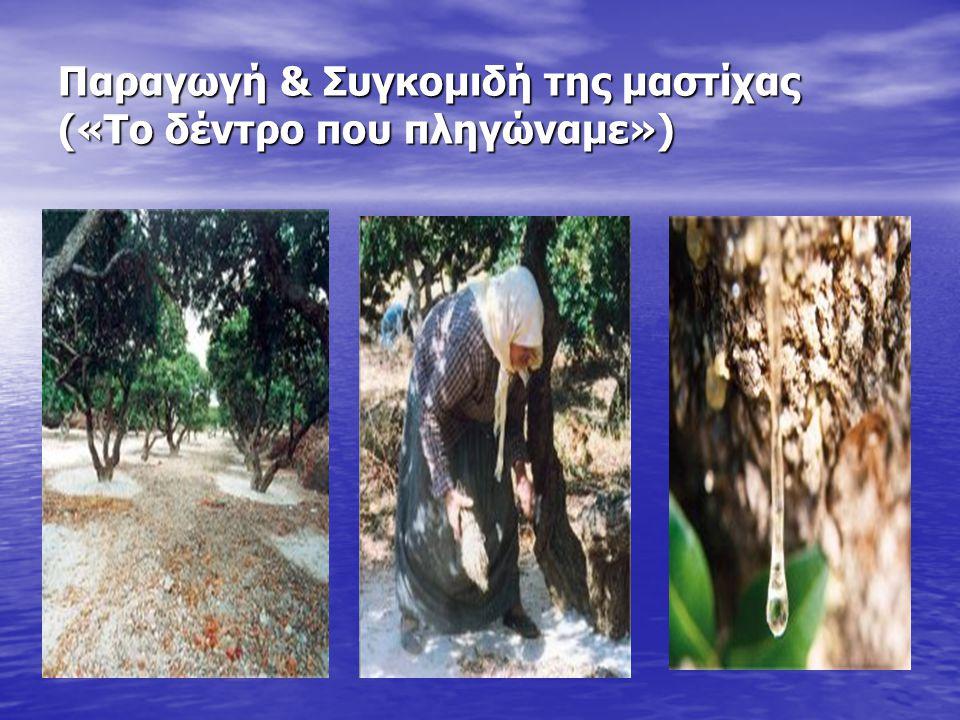Παραγωγή & Συγκομιδή της μαστίχας («Το δέντρο που πληγώναμε»)