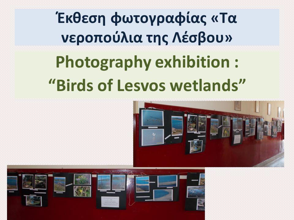 Έκθεση φωτογραφίας «Τα νεροπούλια της Λέσβου» Photography exhibition : Birds of Lesvos wetlands