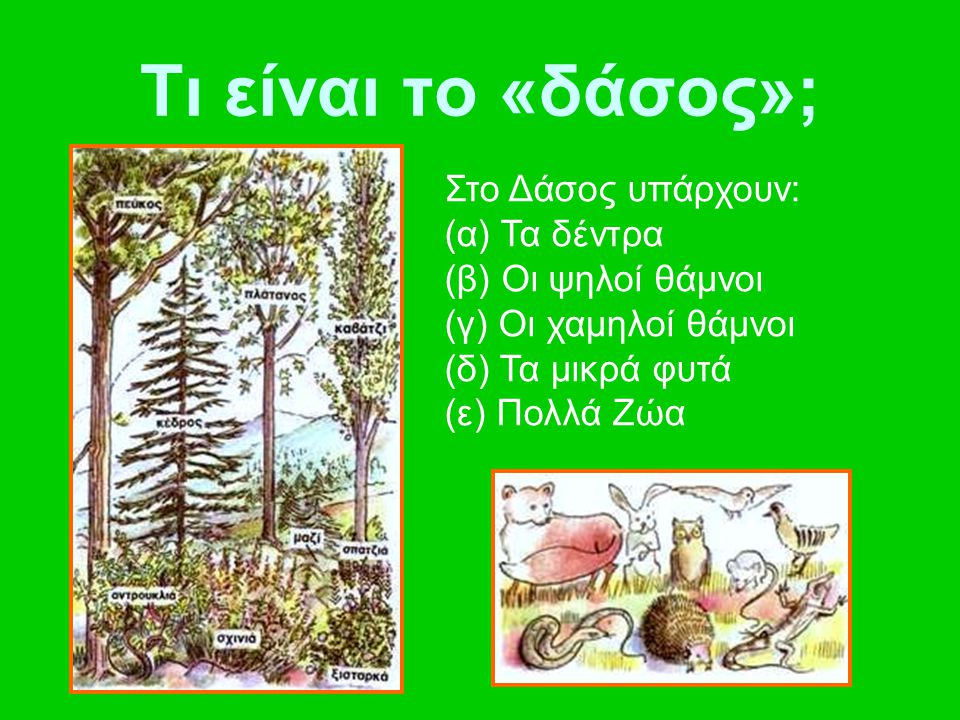 Τι είναι το «δάσος»; Στο Δάσος υπάρχουν: (α) Τα δέντρα (β) Οι ψηλοί θάμνοι (γ) Οι χαμηλοί θάμνοι (δ) Τα μικρά φυτά (ε) Πολλά Ζώα