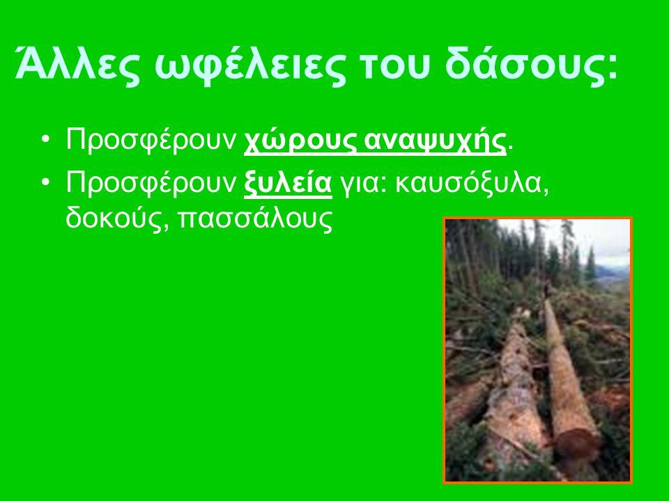 Άλλες ωφέλειες του δάσους: Προσφέρουν χώρους αναψυχής. Προσφέρουν ξυλεία για: καυσόξυλα, δοκούς, πασσάλους