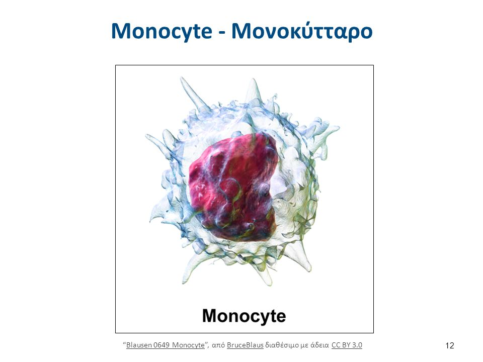 """Monocyte - Μονοκύτταρο 12 """"Blausen 0649 Monocyte"""", από BruceBlaus διαθέσιμο με άδεια CC BY 3.0Blausen 0649 MonocyteBruceBlausCC BY 3.0"""