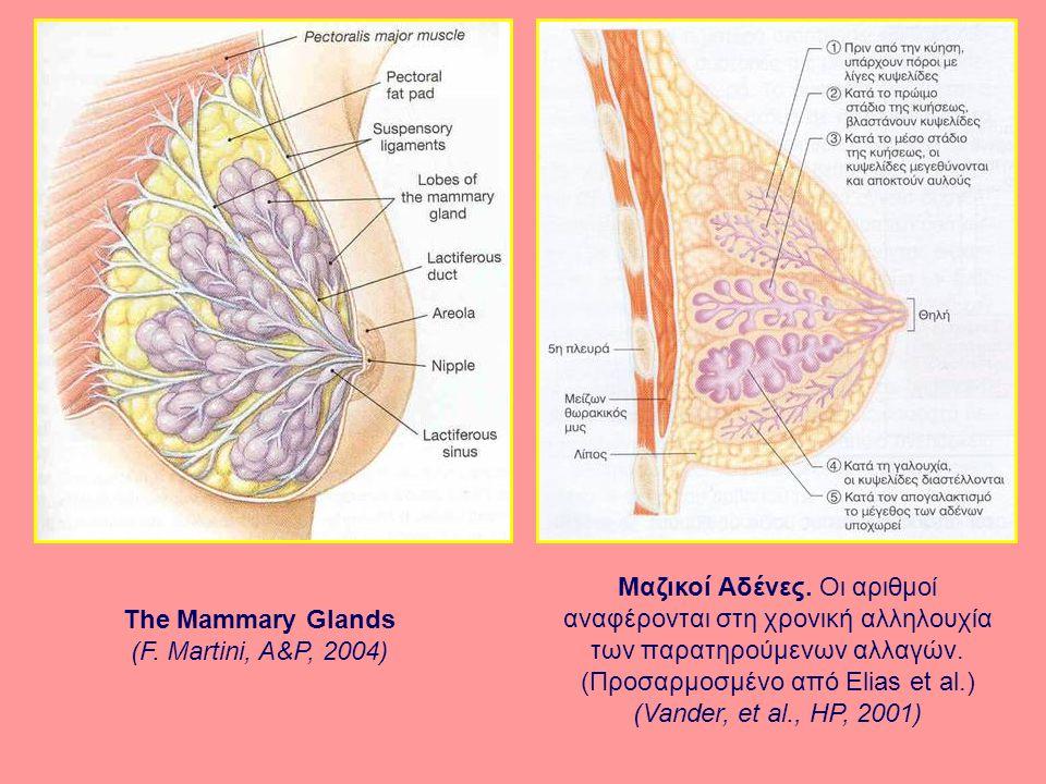 The Mammary Glands (F.Martini, A&P, 2004) Μαζικοί Αδένες.