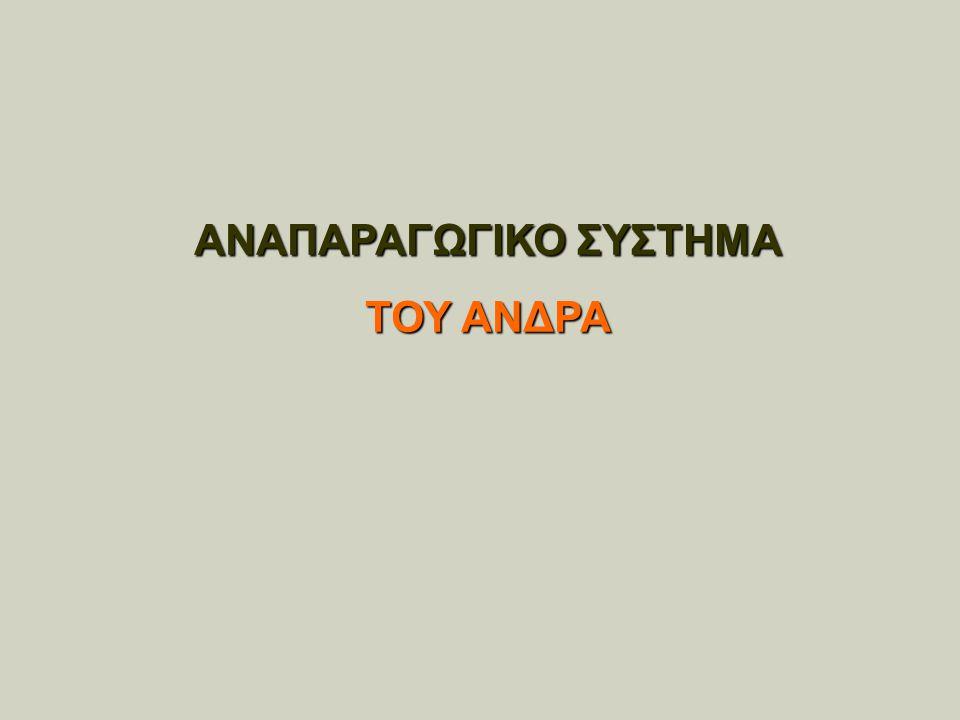 ΑΝΑΠΑΡΑΓΩΓΙΚΟ ΣΥΣΤΗΜΑ ΤΟΥ ΑΝΔΡΑ