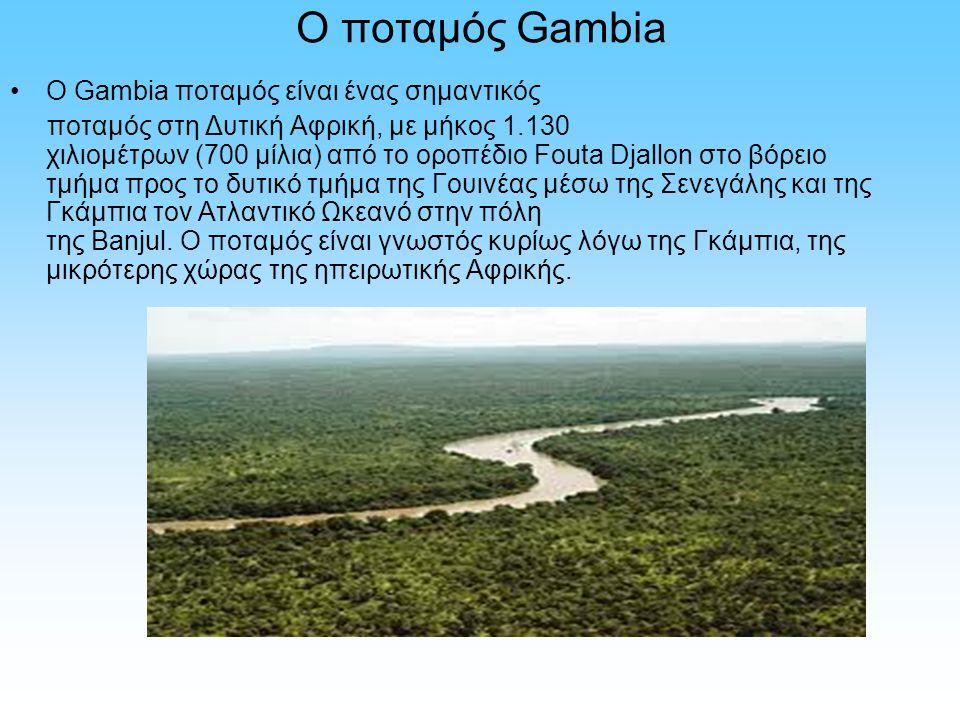 Ο ποταμός Gambia Ο Gambia ποταμός είναι ένας σημαντικός ποταμός στη Δυτική Αφρική, με μήκος 1.130 χιλιομέτρων (700 μίλια) από το οροπέδιο Fouta Djallo