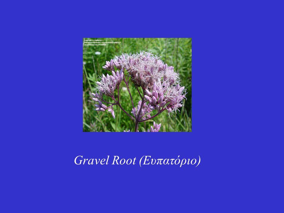 Gravel Root (Ευπατόριο)