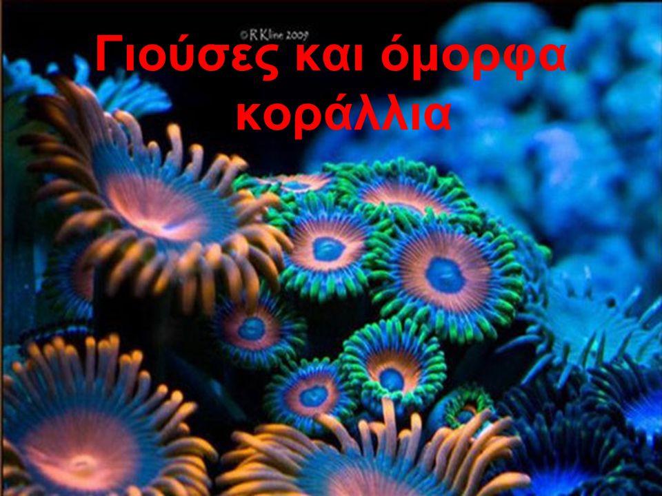 Γιούσες και όμορφα κοράλλια
