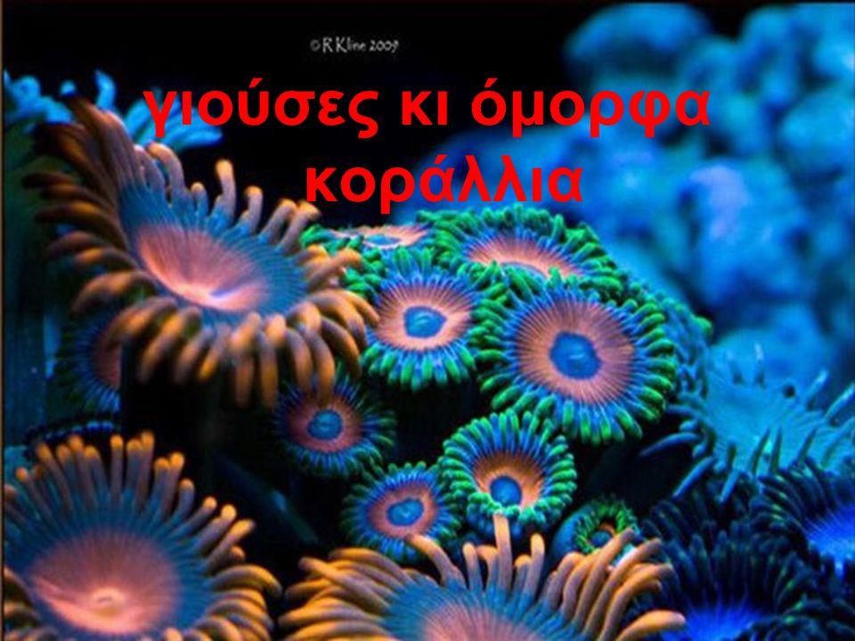 γιούσες κι όμορφα κοράλλια