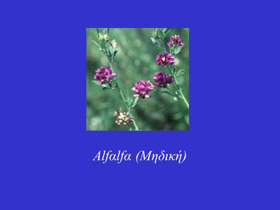 Η μηδική (Medicago sativa L.) είναι ιθαγενές φυτό της Ευρώπης, Ασίας και Βόρειας Αφρικής.