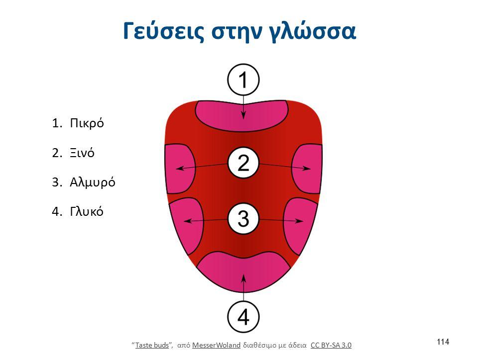 Γεύσεις στην γλώσσα 1.Πικρό 2.Ξινό 3.Αλμυρό 4.Γλυκό Taste buds , από MesserWoland διαθέσιμο με άδεια CC BY-SA 3.0Taste budsMesserWolandCC BY-SA 3.0 114